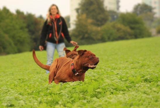 DogOffLeash